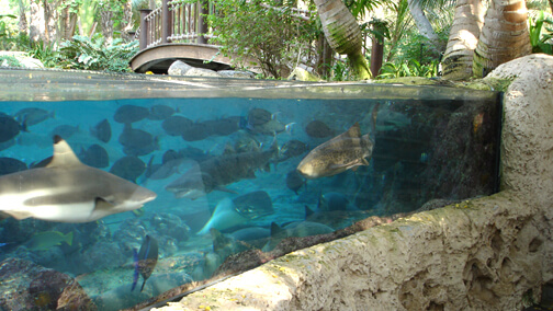Beach House Shark Lagoon