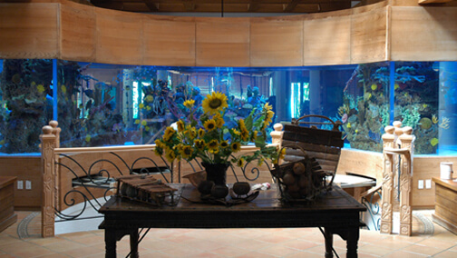 Beach Palace Saltwater Aquarium