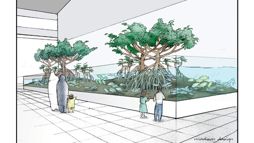 Conceptual drawing for mangrove aquarium, KAUST